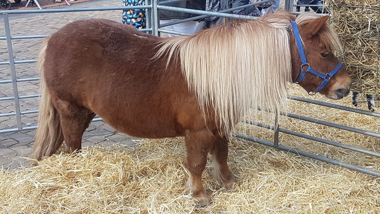 Pony at mobile farm